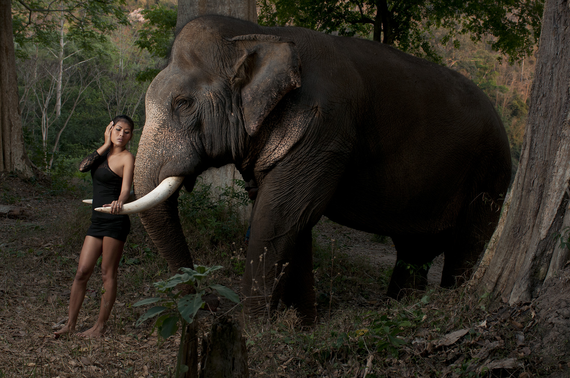 Nang and Elephant